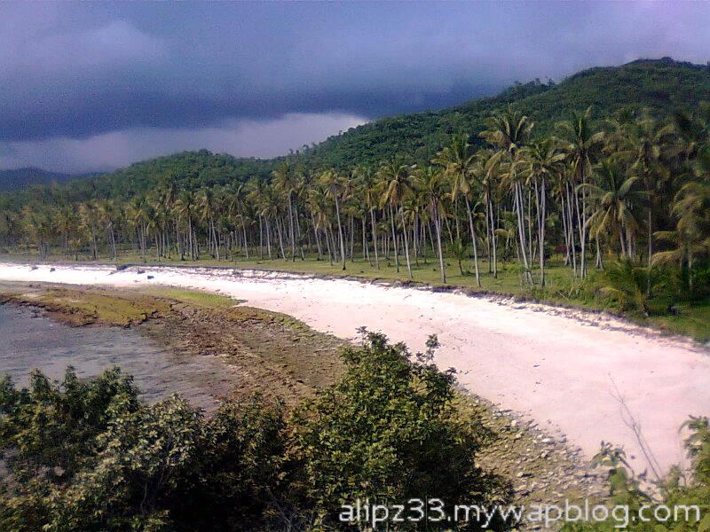 Kebun kelapa pantai daki sukorejo sudimoro pacitan