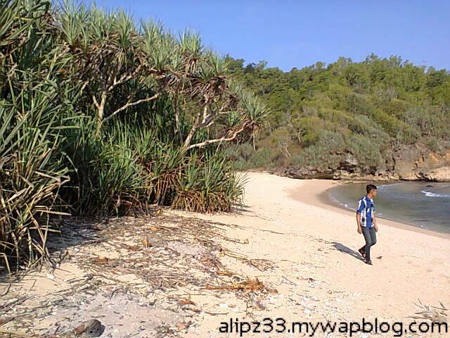 Pepohonan pandan - Pantai ngoyan worawari kebonagung pacitan jawa timur