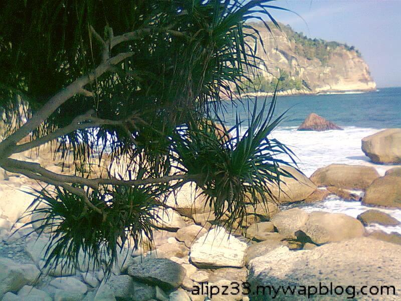 pepohonan pandan pantai pangasan - kalipelus kebonagung pacitan