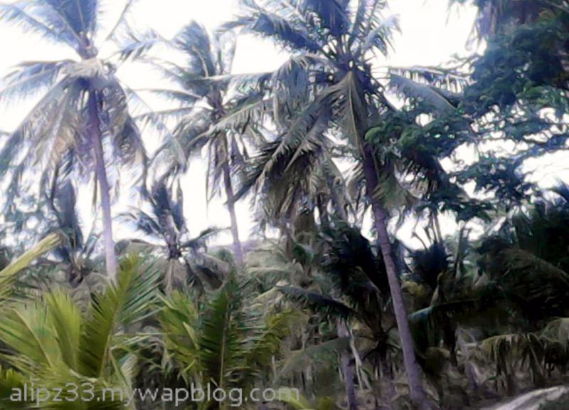 Pepohonan dekat - wisata pantai sruni jlubang pringkuku pacitan