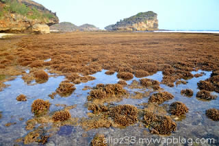 terumbu karang pasang surut pantai ngalian watukarung pacitan
